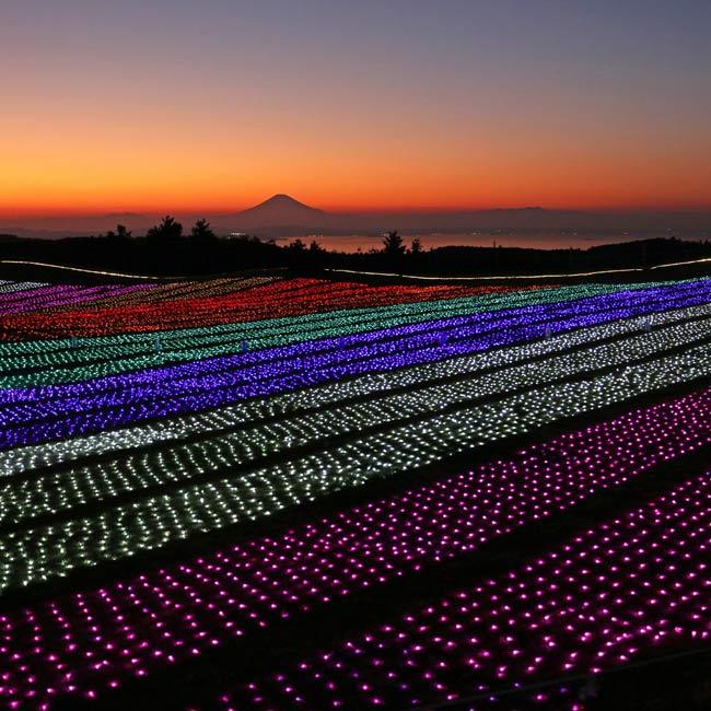 富士山の夕景や夜景とともにイルミを楽しめる!千葉県・マザー牧場に煌めく冬の光の花畑が登場【イルミネーション2019】