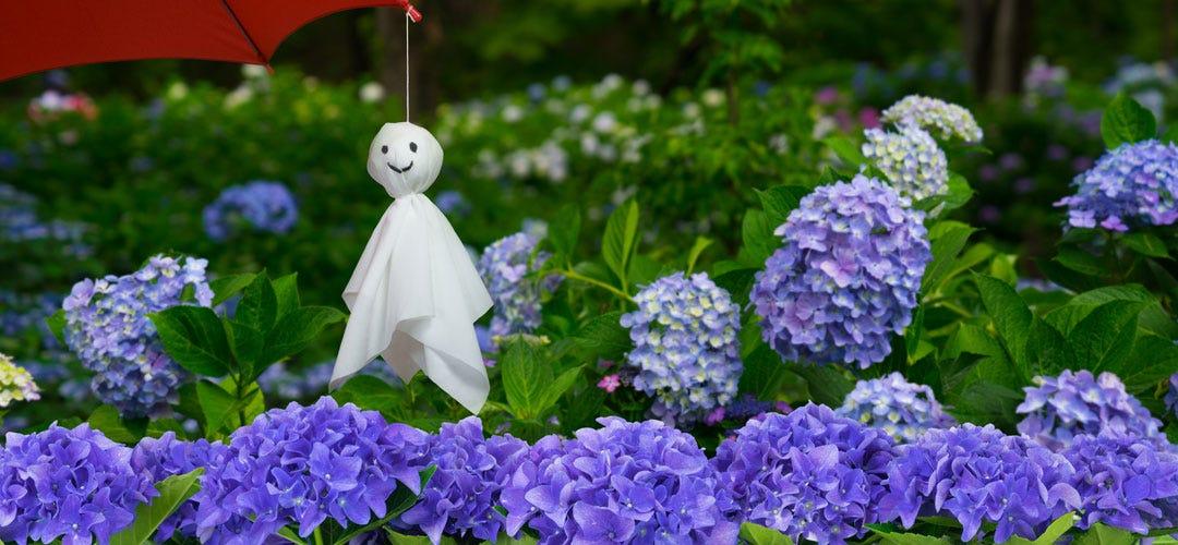 雨だからこそ美しい、梅雨のお花...