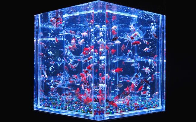 「アートアクアリウム 金魚」の画像検索結果