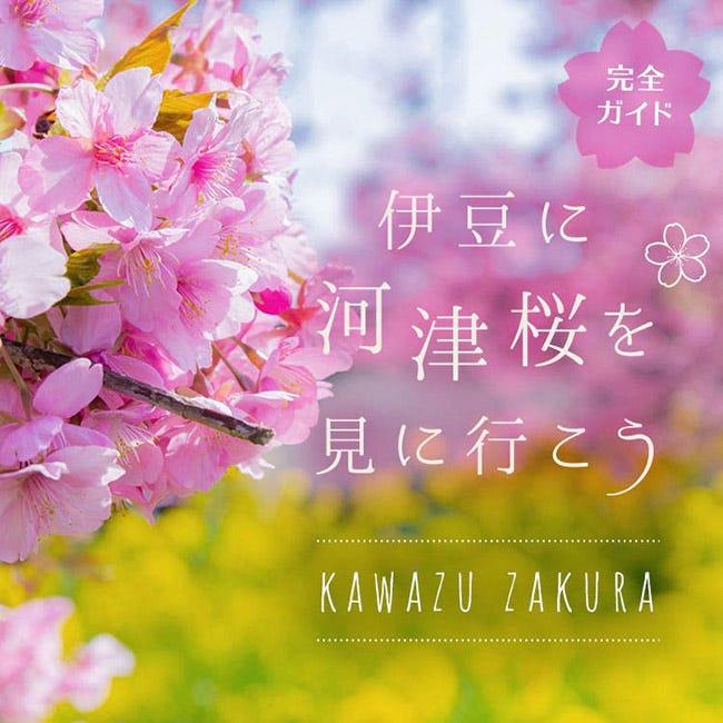 情報 河津 桜 2021 開花