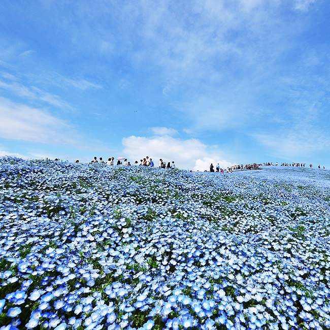 ネモフィラ、チューリップなど、春の花々と海とのコントラストが美しい!国営ひたち海浜公園の「Flowering 2020」