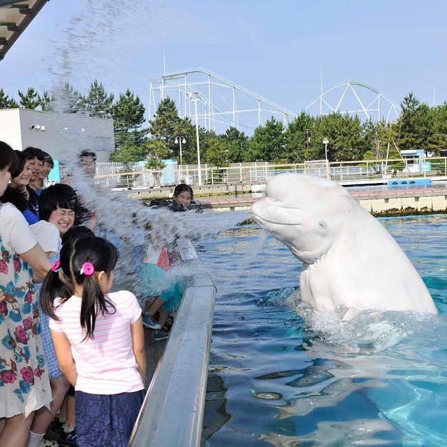 幻想的なクラゲゾーンやずぶ濡れイベントなど満載!横浜・八景島シーパラダイスの夏イベント「ナツパラ!」