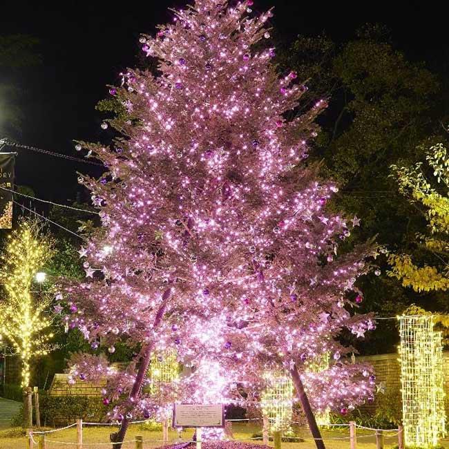 ロマンチックな展望スポット。横浜「アメリカ山公園」を彩るシャンパンゴールドのイルミ【イルミネーション2019】