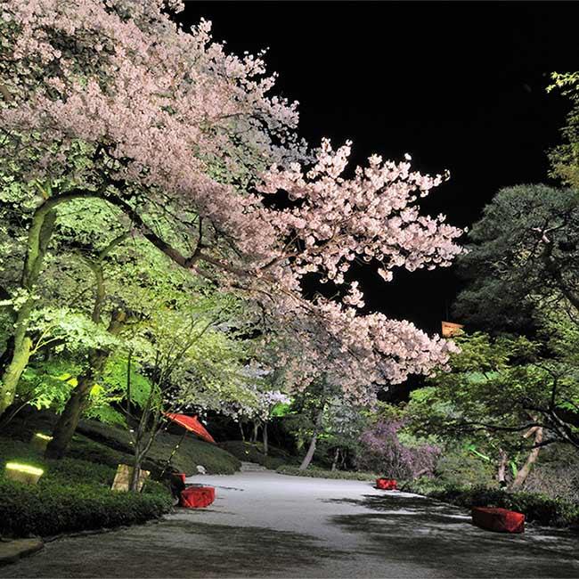 東京女性が選ぶ、女友達と行きたいお花見スポットTOP5!桜を眺めながらガールズトーク