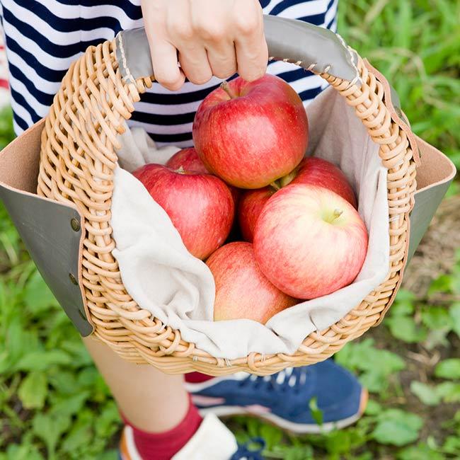 旅の目的にしたい イベント・祭り・フェス 「弘前りんご博覧会」