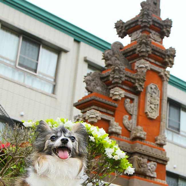 【すべてWEB予約可能】ペット同伴OK!愛犬と一緒に楽しめる温泉・リゾート施設5選