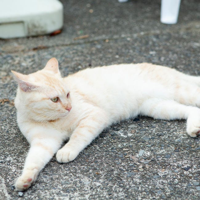式根島を歩けば、猫に出会う!? 式根島に伝わる猫伝説とは?