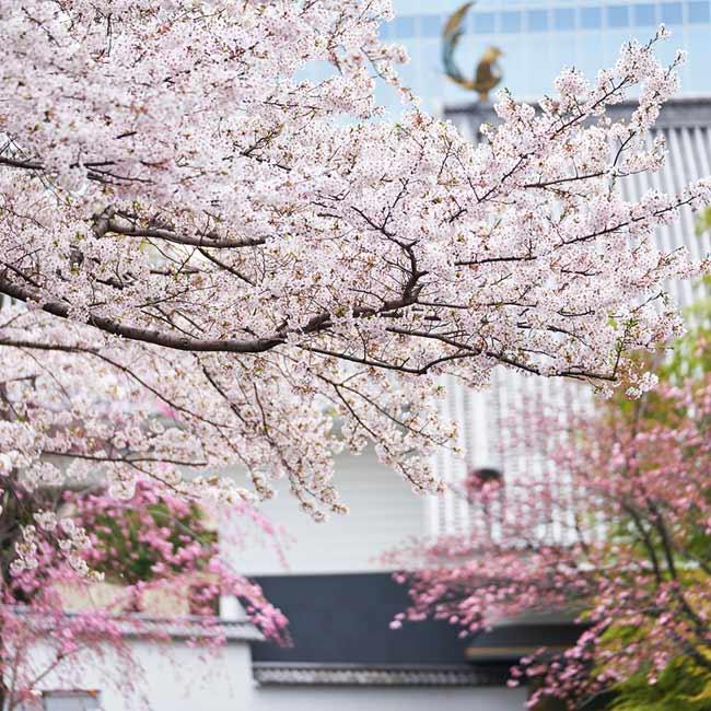 夜桜ステイも。お花見デートはおこもりで、東京ホテル7選