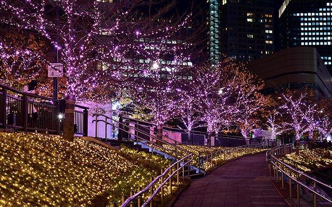 目黒川沿いの桜をLEDでライトアップ