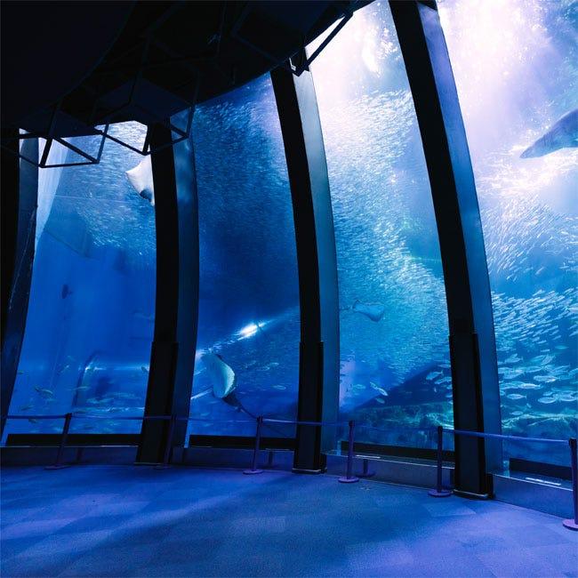 【水族館】異なる4つの水族館とさまざまなアトラクションが楽しめる複合型レジャーアイランド