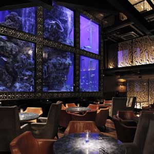 AQUA RESTAURANT & BAR LUXIS/イタリアン/恵比寿