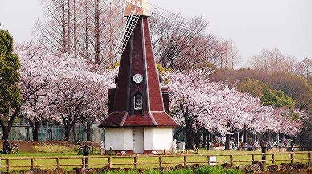 【東京・浮間舟渡】浮間公園