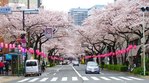 中野通りの桜を見に行こう!東京・神奈川のお花見特集 2018【OZmall】